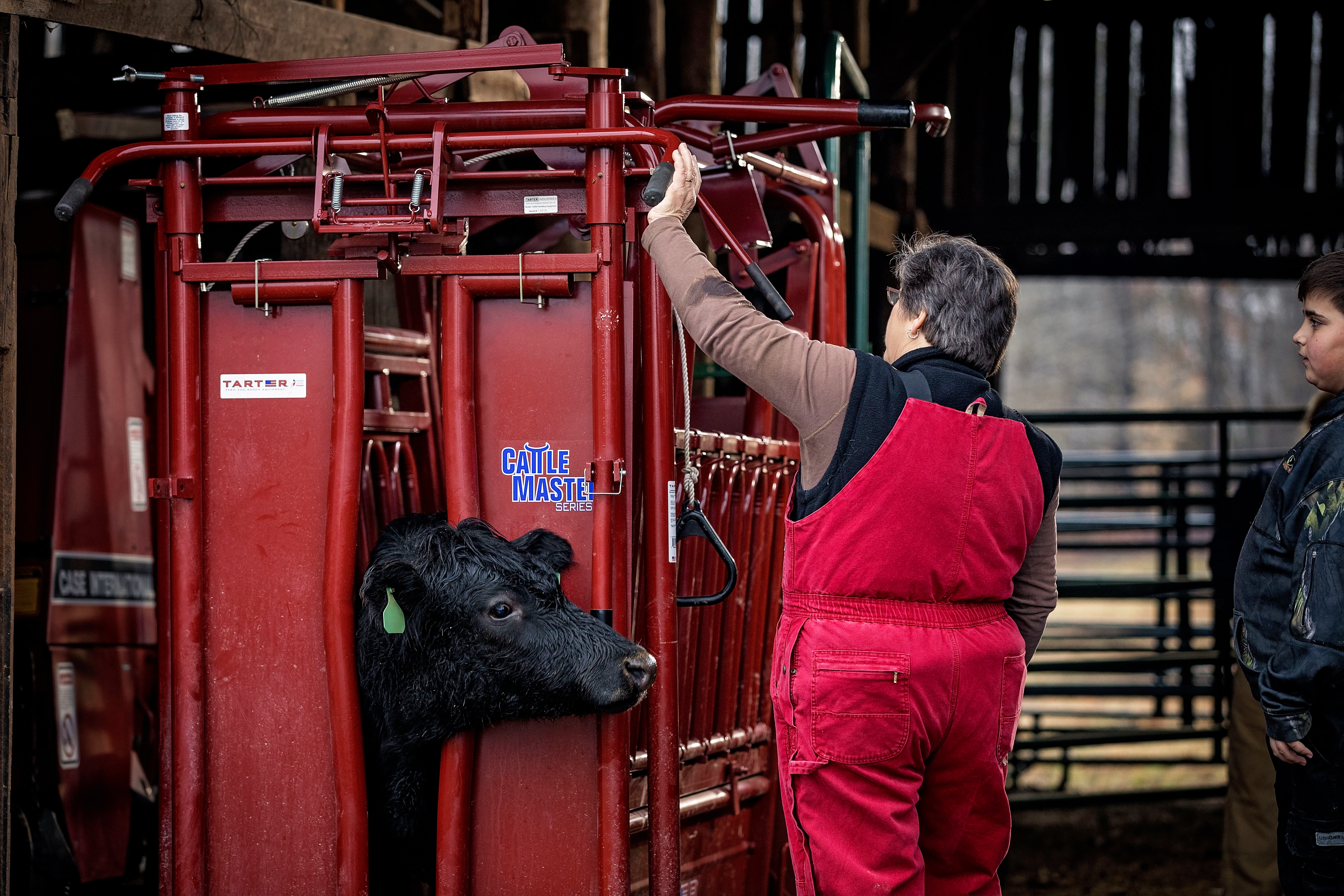 Recommendations for a healthy beef cattle herd.